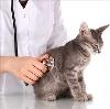 Ветеринарные клиники в Погаре